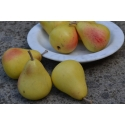 Small yellow pears