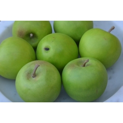 """""""Small"""" Green Apples"""