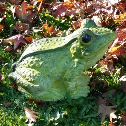 Green Giant Toad
